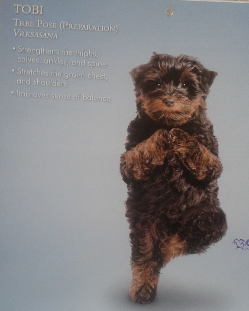 bcy doggie calendar